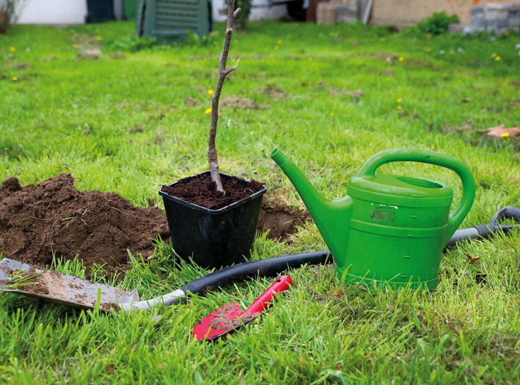 sub plantation arbre